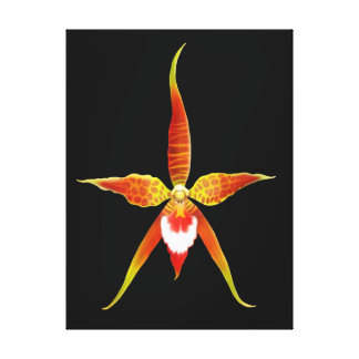 Rynchostele Orchid Flower Wrapped Canvas
