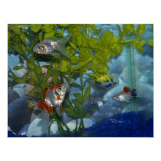 Ryukin goldfish platys aquarium Poster