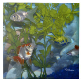Ryukin goldfish platys Tile