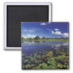 S.A., Brazil, Waterways in Pantanal 2 Inch Square Magnet