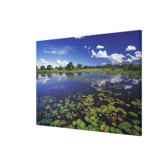 S.A., Brazil, Waterways in Pantanal Canvas Print