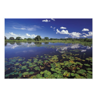 S.A., Brazil, Waterways in Pantanal Photographic Print