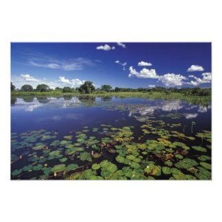 S.A., el Brasil, canales en Pantanal Impresion Fotografica