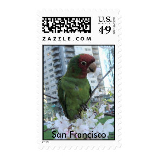 S.F. Wild parrot #3 Stamp
