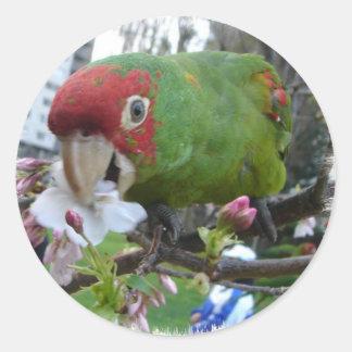 S.F.wild parrot #5 Round Sticker
