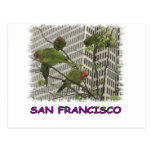 S.F. Wild parrot #6 Post Card