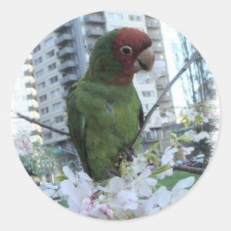 S.F. Wild parrot Stickers