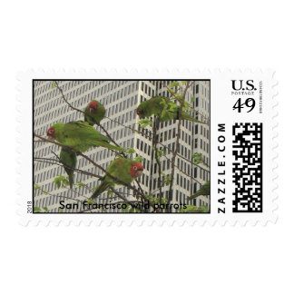 S.F. wild parrots #6 Postage Stamps