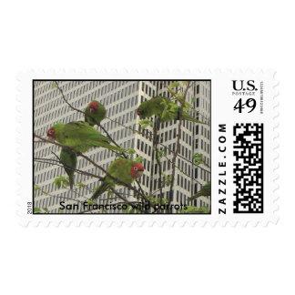 S.F. wild parrots #6 Stamps