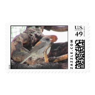 S Flaming Gorge Utah Fauna Birds Aves Animals Postage Stamp