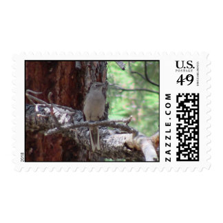 S Flaming Gorge Utah Fauna Birds Aves Animals Stamp