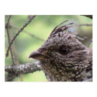 S Flaming Gorge Utah Fauna Birds Aves Animals Postcards