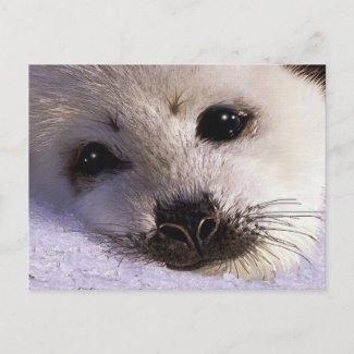 S.O.S. SAVE OUR HARP SEALS Postcards zazzle_postcard