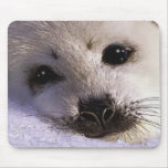 S.O.S. SAVE OUR HARP SEALS Wildlife Mousepad