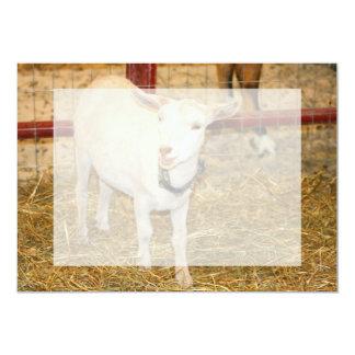 Saanen doeling goat mouth open card