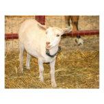 Saanen doeling goat mouth open customized letterhead
