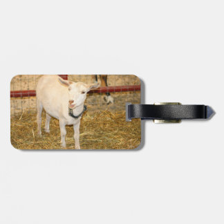 Saanen doeling goat mouth open tags for luggage