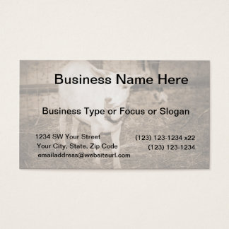 Saanen doeling sepia goat mouth open business card