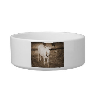 Saanen doeling sepia goat mouth open cat bowls
