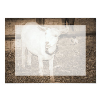 Saanen doeling sepia goat mouth open personalized invitation