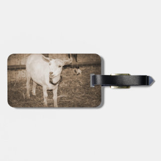 Saanen doeling sepia goat mouth open bag tags