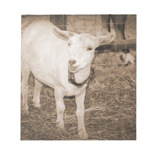 Saanen doeling sepia goat mouth open memo note pads