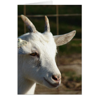 Saanen Goat Greeting Card