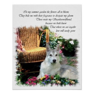 Saarlooswolfhond Art Gifts Poster