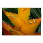 SABA: Heliconia caribbaea Stationery Note Card