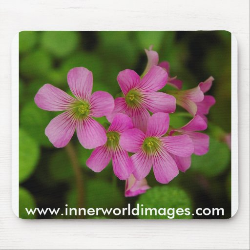 Saba March 2008Purple Cluster Flowers Mouse Pad