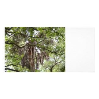 sabal palm through live oak branches tree card