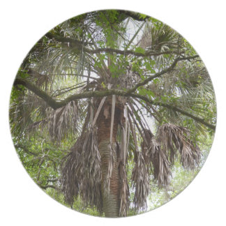 sabal palm through live oak branches tree dinner plate