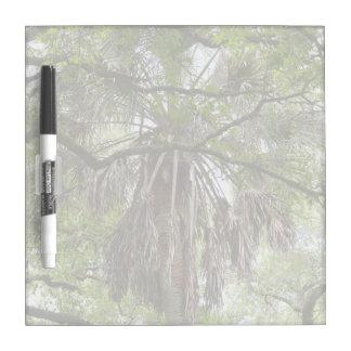 sabal palm through live oak branches tree Dry-Erase board