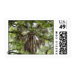 sabal palm through live oak branches tree postage
