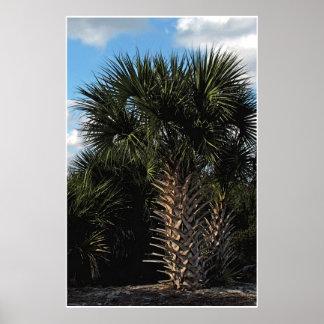 Sabal Palms Poster