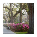 Sabana Georgia en las azaleas Oa del parque de For