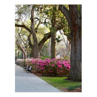 Sabana Georgia en las azaleas Oa del parque de Tarjetas Postales