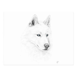 Saber A Siberian Husky Drawing Art Blue Eyes Postcard