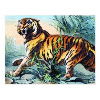 Saber Toothed Tiger Postcard