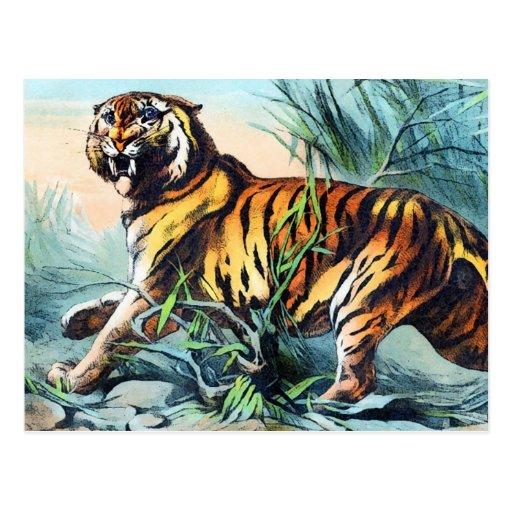 Saber Toothed Tiger Postcards