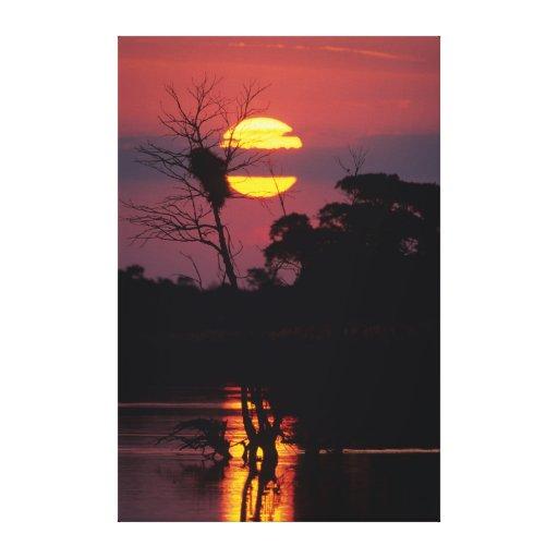 Sabi River At Sunset, Kruger National Park Stretched Canvas Prints