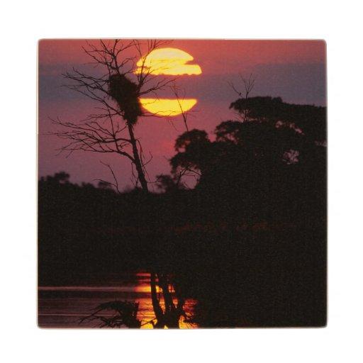 Sabi River At Sunset, Kruger National Park Maple Wood Coaster
