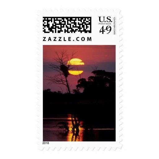 Sabi River At Sunset, Kruger National Park Postage
