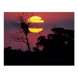 Sabi River At Sunset, Kruger National Park Postcard