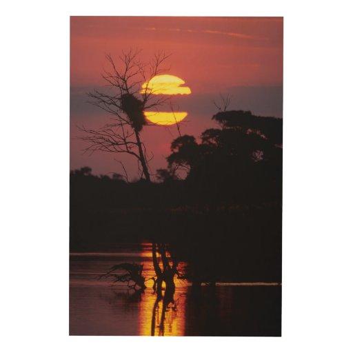 Sabi River At Sunset, Kruger National Park Wood Canvas