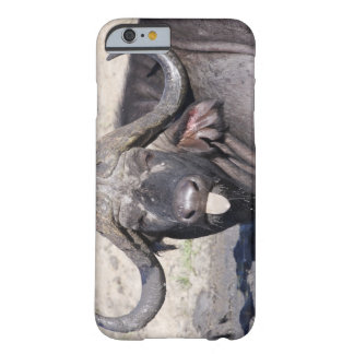 Sabi Sands Conservancy, Mpumalanga Province, 2 Barely There iPhone 6 Case