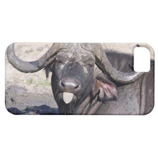 Sabi Sands Conservancy, Mpumalanga Province, 2 iPhone 5 Cases