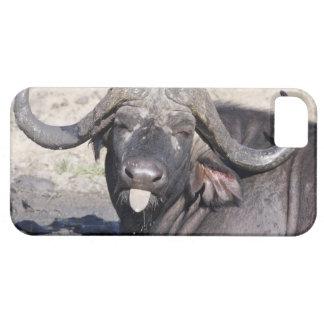 Sabi Sands Conservancy, Mpumalanga Province, 2 iPhone SE/5/5s Case