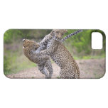 Sabi Sands Conservancy, Mpumalanga Province, iPhone 5 Cases