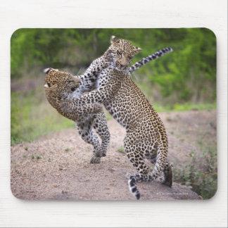Sabi Sands Conservancy, Mpumalanga Province, Mouse Pad